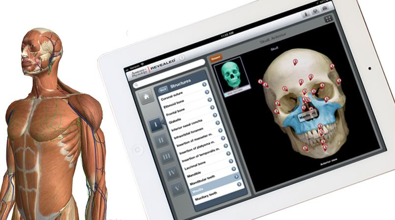 Best Human Anatomy Apps to Learn Human Anatomy